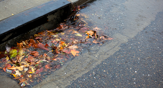 Help Us Prevent Stormwater Runoff Pollution